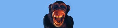 Ominidi discendenti dalle scimmie?